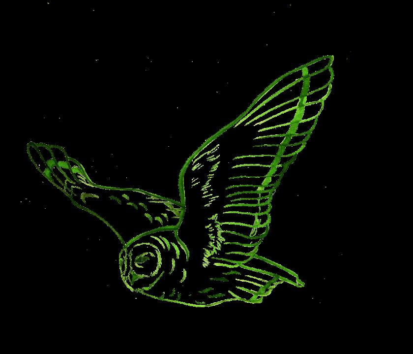 fliegendeeule-grün